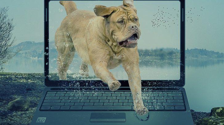 padres-de-perros-perro-saltando