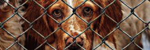 conviértete en un voluntario perro en una jaula 300x100 - conviértete-en-un-voluntario-perro-en-una-jaula
