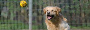 conviértete-en-un-voluntario-perro-jugando
