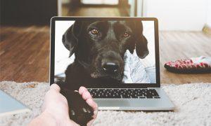 padres de perros control remoto 300x180 - padres-de-perros-control-remoto