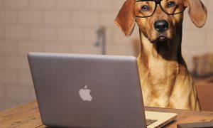 padres de perros perro portátil 300x180 - padres-de-perros-perro-portátil
