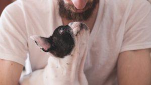 beneficios para mascotas dueño de una mascota 300x169 - beneficios-para-mascotas-dueño-de-una-mascota