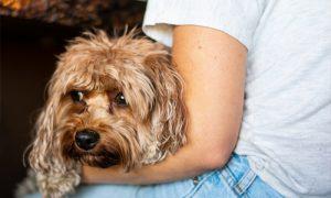 beneficios para mascotas perro descansando 300x180 - beneficios-para-mascotas-perro-descansando