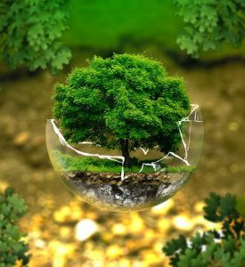 árbol ecología 275x300 - árbol-ecología