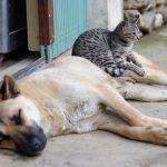 gato y perro 150x150 - Formas interesantes de recaudar fondos para refugios para animales