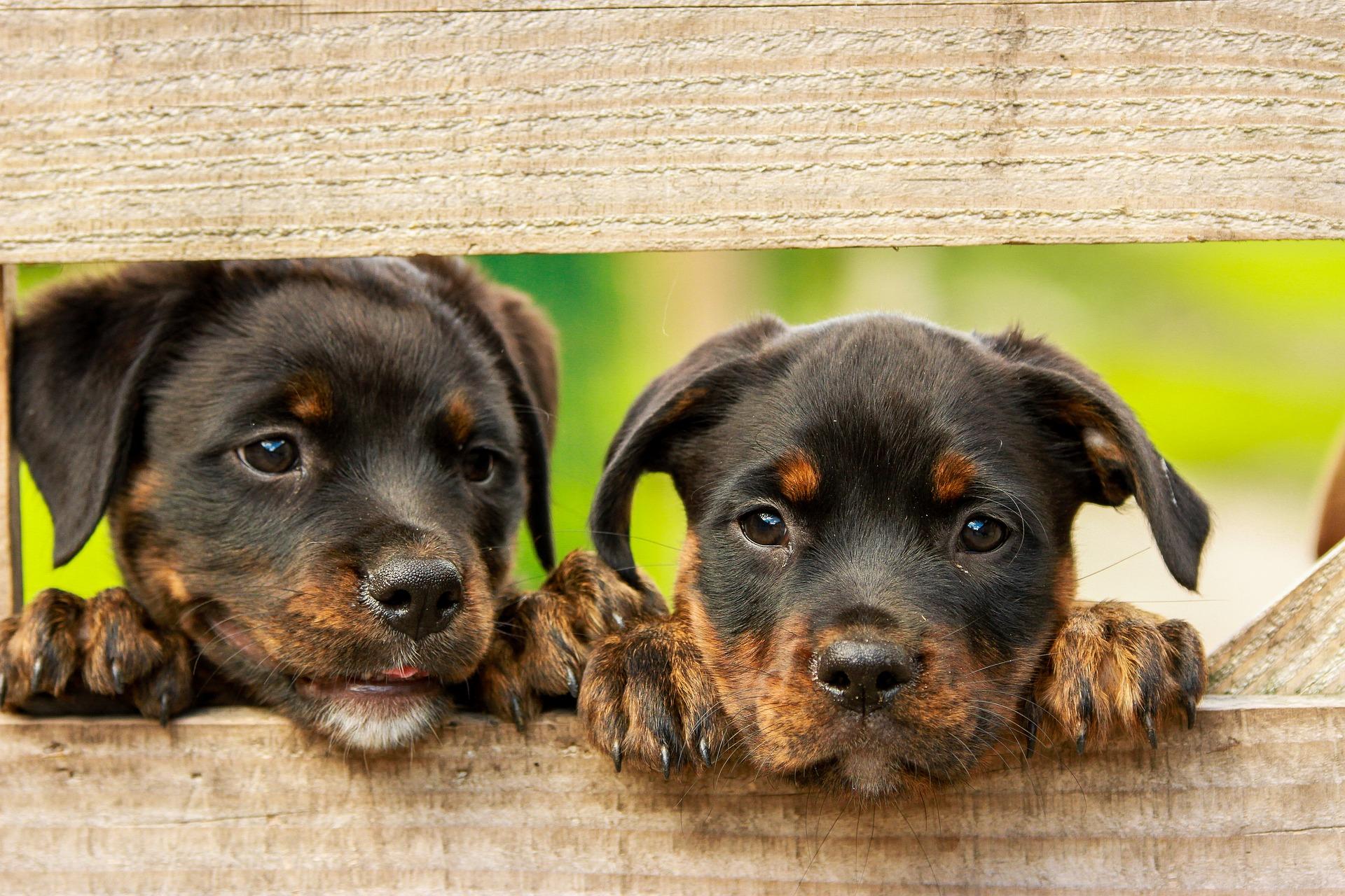perros lindos - ¡No compres animales, mejor adopta!