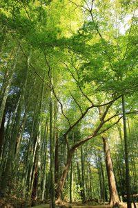 bosque 200x300 - bosque