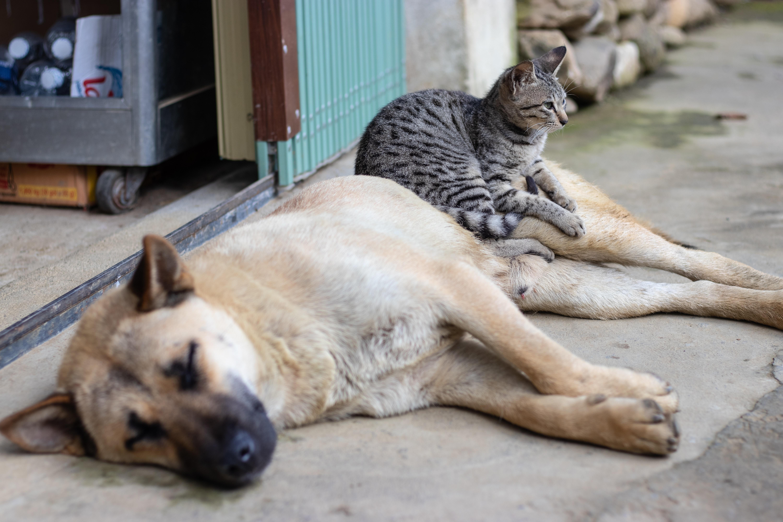 gato y perro - Formas interesantes de recaudar fondos para refugios para animales