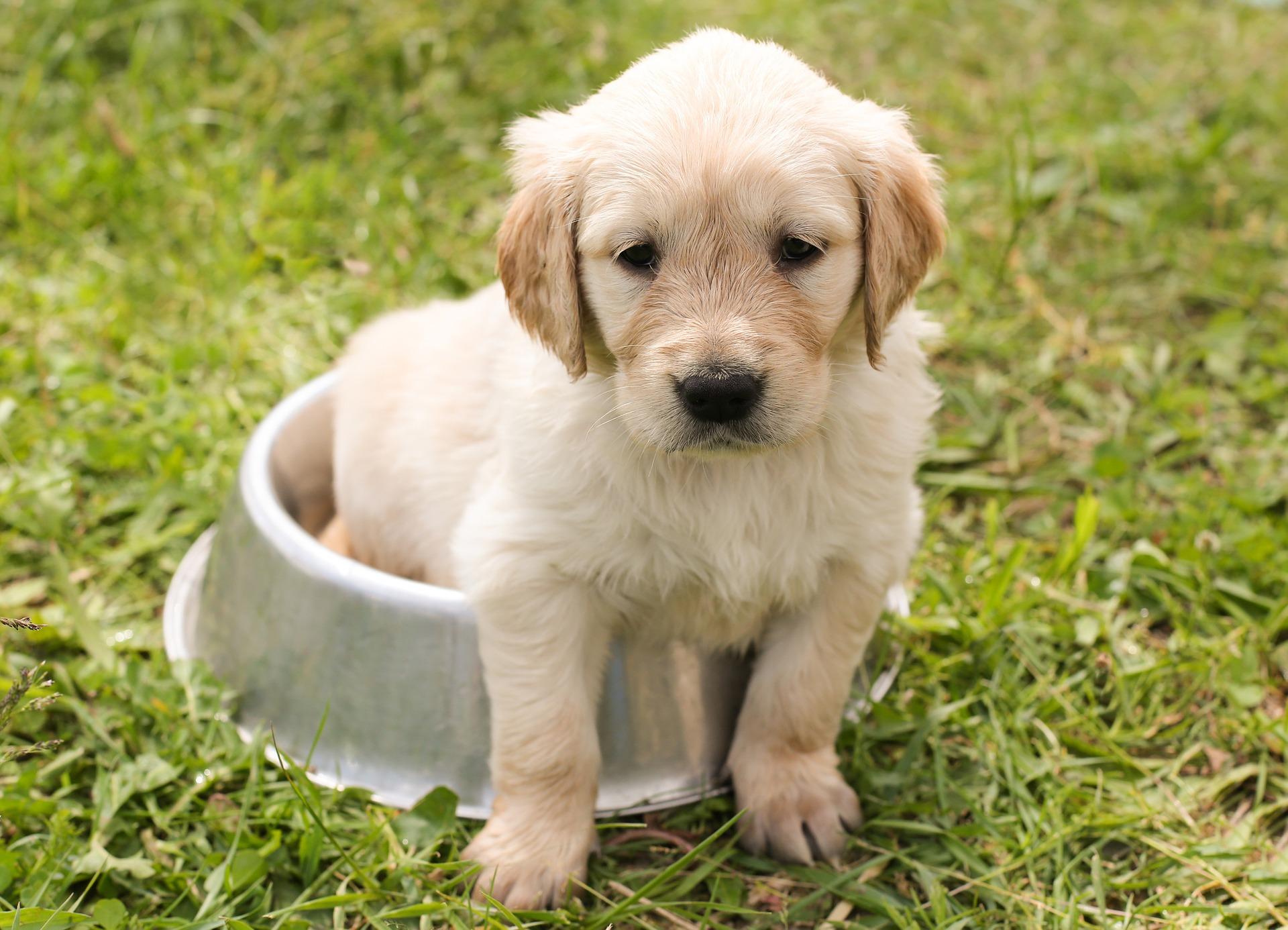 perrito - Cosas a considerar antes de obtener una mascota