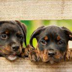 perros lindos 150x150 - ¡No compres animales, mejor adopta!