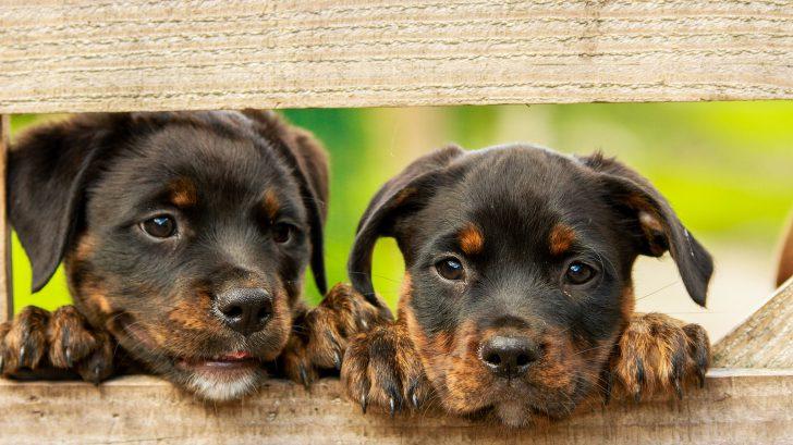 perros lindos 728x409 - ¡No compres animales, mejor adopta!