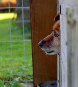 Refugio para perros 269x300 - Refugio para perros