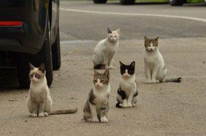 gatos callejeros 300x199 - gatos callejeros