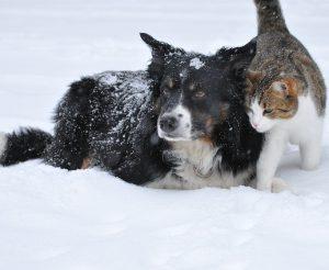 mascotas en la nieve 300x246 - mascotas en la nieve