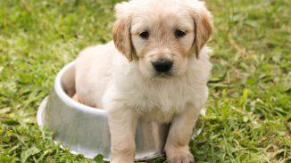 perrito 326x183 - Cosas a considerar antes de obtener una mascota