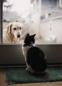 mascotas en casa 219x300 - mascotas en casa